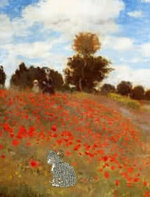 Wonder and mice and poppies